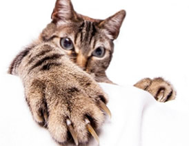 Cats restricted by arthritis