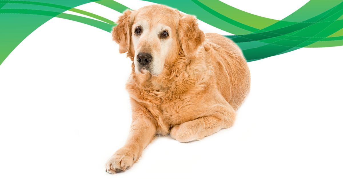 Zoonotic Diseases Dogs Australia