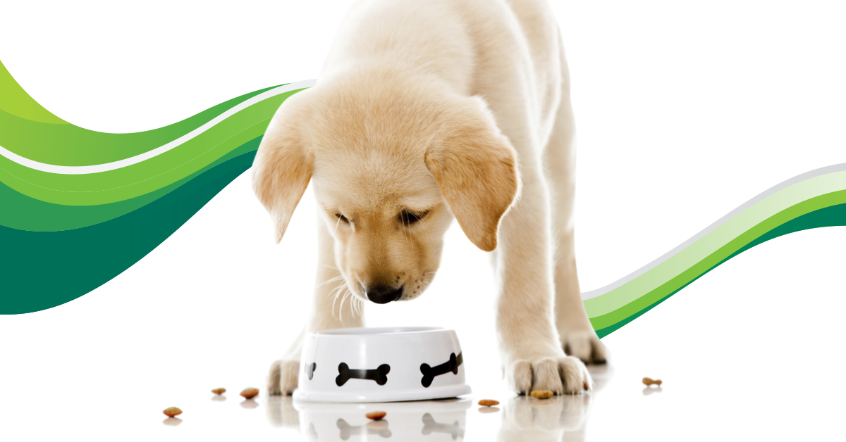 conditions   pet care information from greencross vets australia