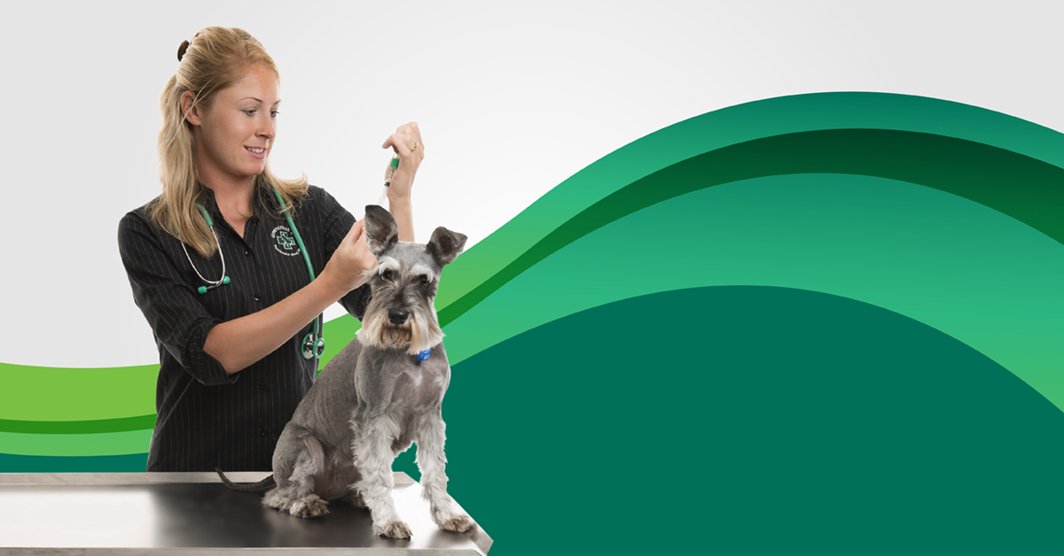 Vaccinating Your Dog Articles Of Interest Common