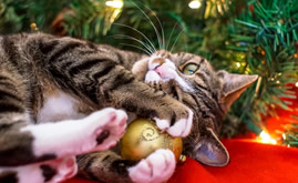 Cats and Christmas time