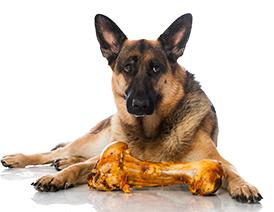 Can My Dog Eat Leftover Bones? - Greencross Vets
