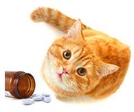 Adult cat sitting next to a jar of pills