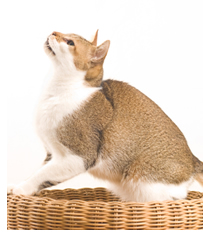 Cat jumping out of wooden basket