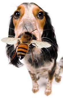 Bee Stings Dog Bites