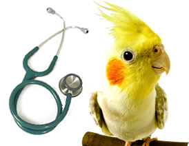Taking Your Pet Bird To The Vet - Greencross Vets