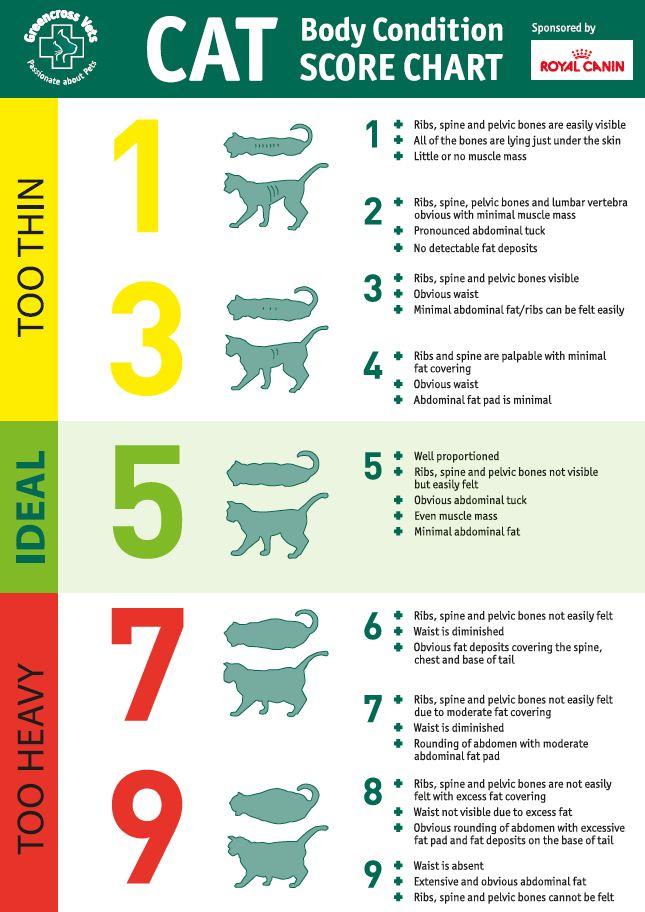 cat body conditioning score chart