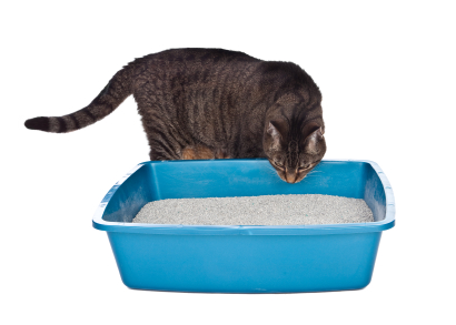 adult cat investigating litter tray