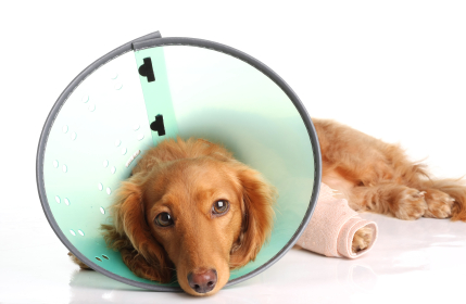 Image result for pet surgery