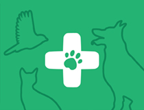 Greencross Vets Pet Desexing