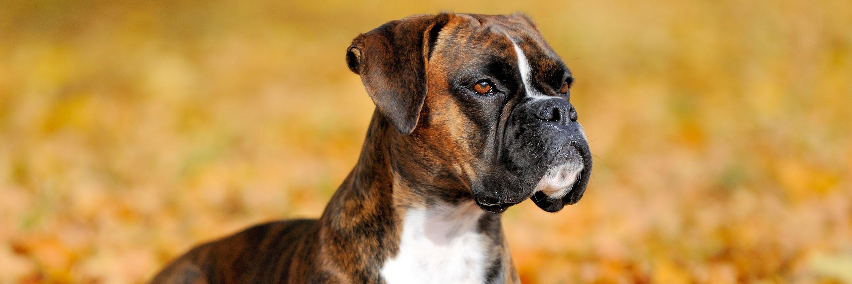 Corneal Ulcers In Pets - Greencross Vets