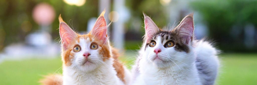Why Is My Cat Panting? - Greencross Vets