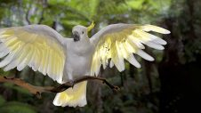 Stress In Pet Birds - Greencross Vets