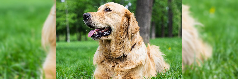 Veterinary Positions & Career Opportunities - Greencross Vets
