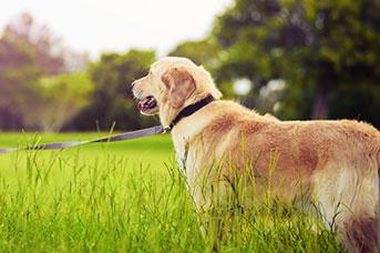 Greencross Vets - Your Pets Health  Australia's Leading
