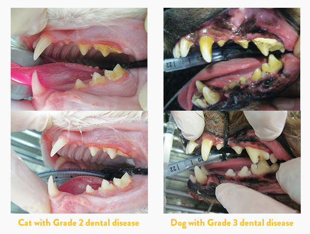 Before and after a dental procedure