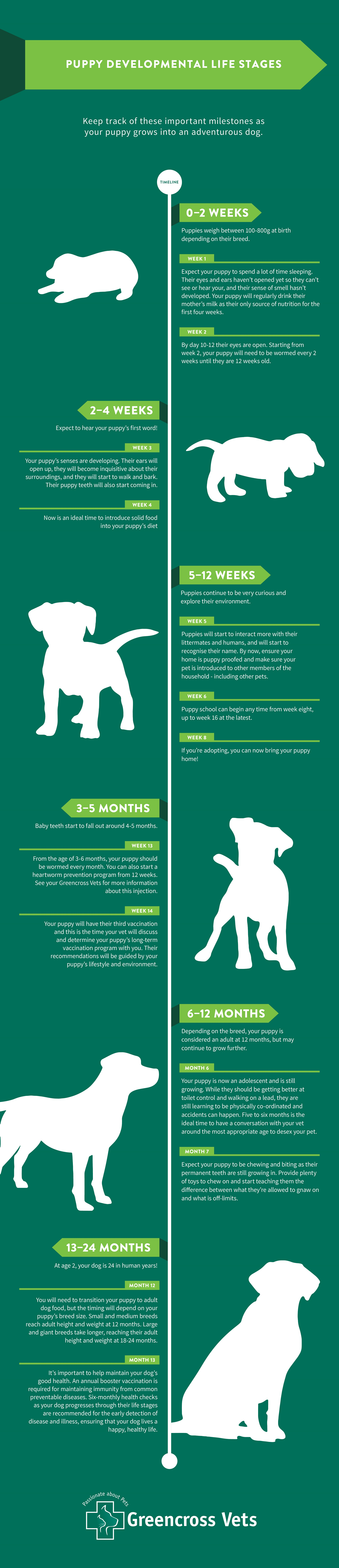 Puppy Development Stages infographic