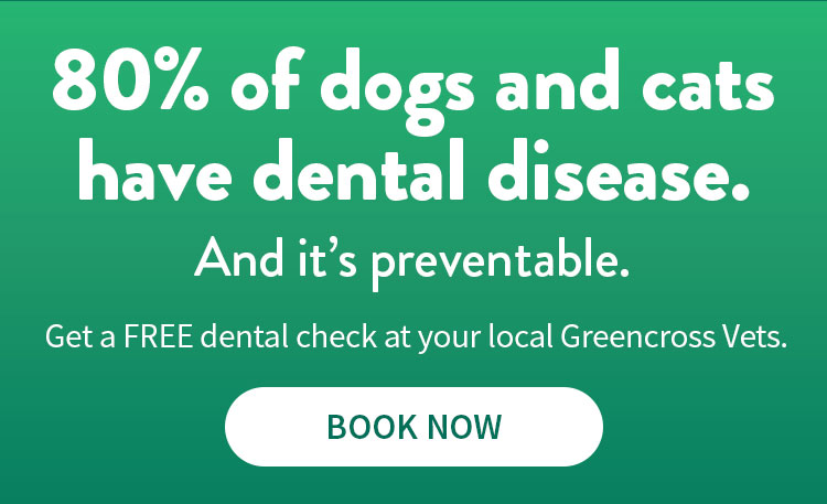 Book a free dental checkup