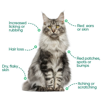 Signs of Itchy Cats