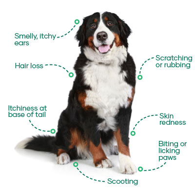 Signs of itchy dogs