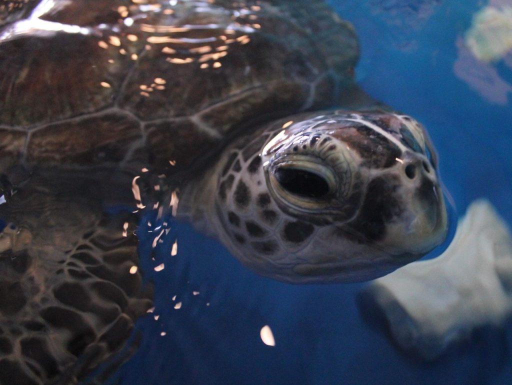 George the sea turtle